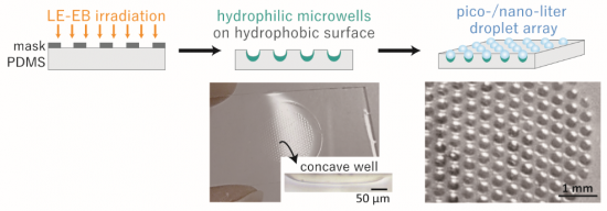 photo of Schematic illustration of single-step fabrication of concave patterns with long-lasting hydrophilic inner surfaces (green areas) on hydrophobic PDMS surface. The droplet array was obtained after wetting the sample surface with water