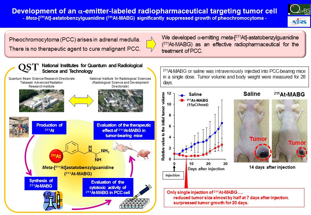 Development of an α-emitter-labeled radiopharmaceutical targeting tumor cell の画像