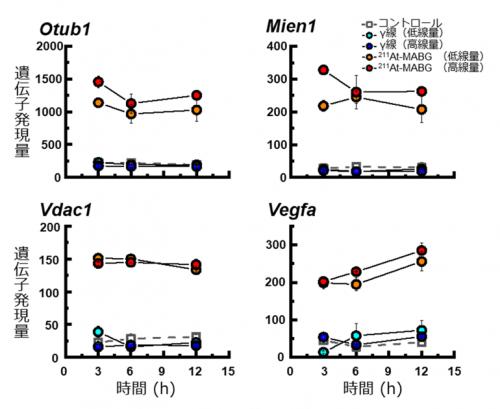 4つの211At-Mabg特異的に応答する指標候補遺伝子
