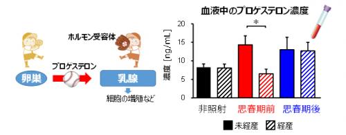 図4 プロゲステロンの作用と血中濃度