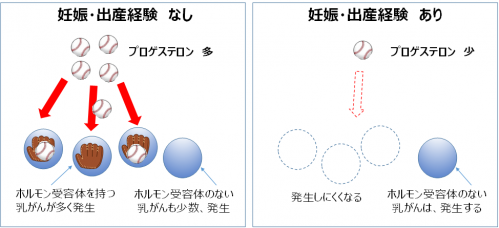 図5 妊娠・出産経験の有無とホルモン受容体の発現量の違い