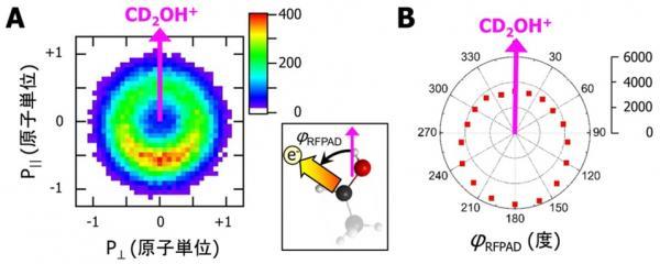 測定された分子座標系の 2次元電子運動量分布