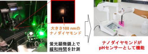 蛍光顕微鏡観察によるナノpHセンサー