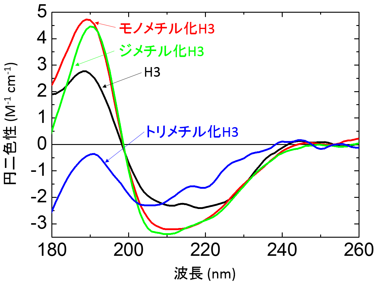 図3. モノメチル化(赤)、ジメチル化(緑)、トリメチル化H3(青)とメチル化していない通常のH3(黒)の円二色性スペクトル。の画像
