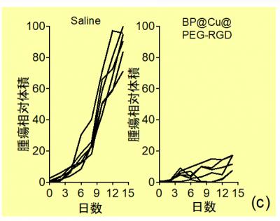 生理食塩水またはBP@Cu@PEG-RGDを投与した担癌マウスに光温熱治療を行った後の腫瘍体積の変化