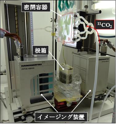 分泌物を観察するための実験セットアップ