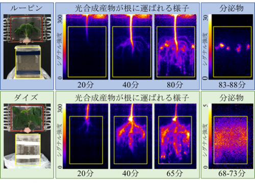 根圏イメージング実験によって得られた画像