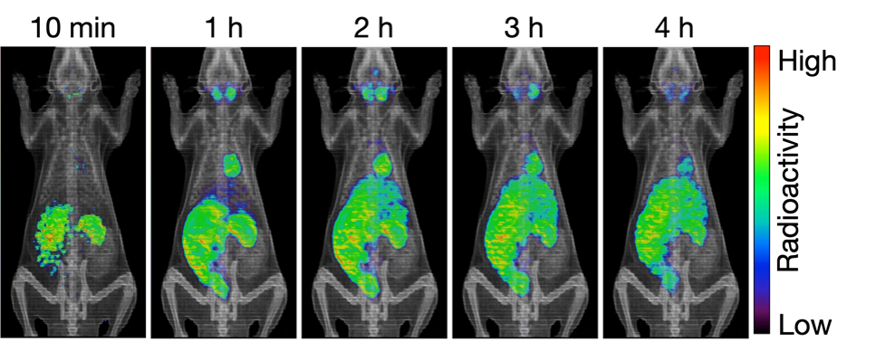 The distribution of Cs in a living animal visualized by PET imaging