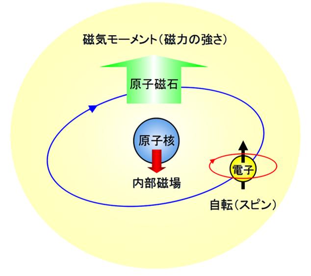 図1.原子磁石の模式図。原子磁石の磁力(磁気モーメント)と原子核位置での内部磁場は、いずれも電子の自転(スピン)により互いに逆向きに生み出されます。本研究では、メスバウアー分光法を用いて原子核位置での内部磁場を計測し、それにより原子磁石の磁性を評価しま