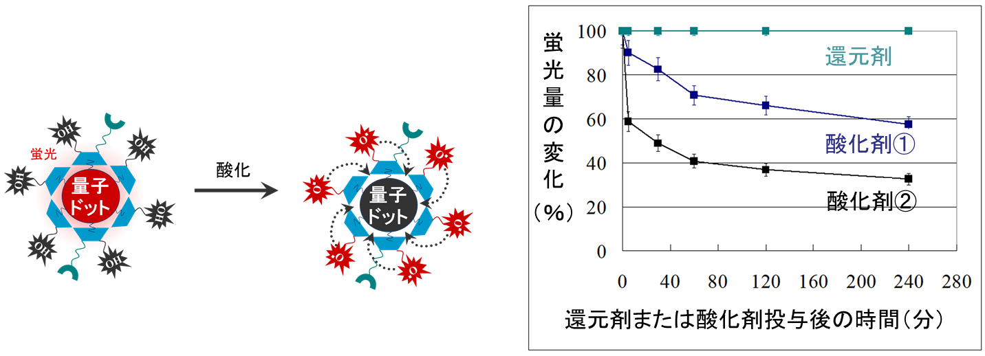 図3. 量子センサーの酸化剤に対する反応