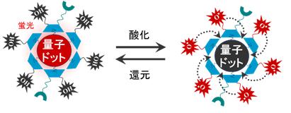 開発した量子センサーの模式図