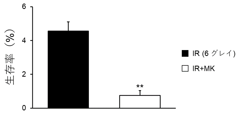 X線とG2期チェックポイント阻害剤を併用した際の細胞生存率の比較