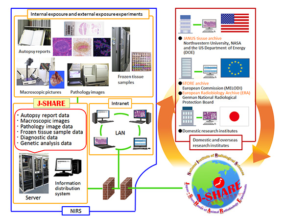 Construction of a Radiobiological Archive of Animal Experiments (J-SHARE) photo