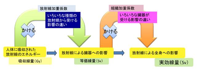 放射線被ばくに関するQ&A - 量子科学技術研究開発機構